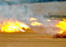 Incendierea_miristilor_si__vegetatiei_uscate