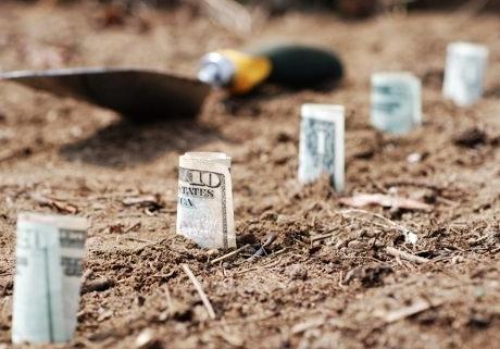 cele-mai-profitabile-culturi-agricole-in-2015